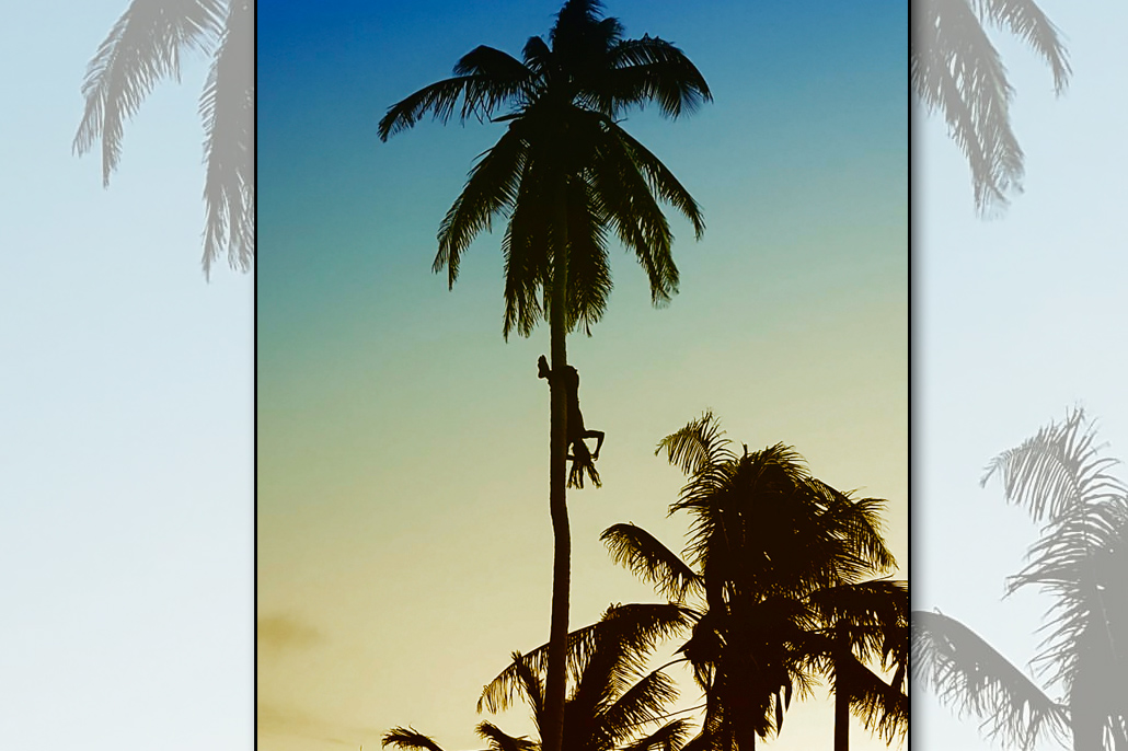 Just Hanging Around on Ambergris Caye, Coconut Leo, Tree Climber