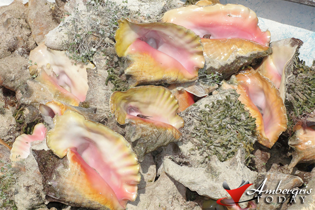 I Bet You Did Not Know This About Conch