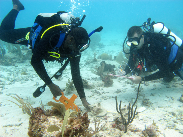 Belize Completes Training in Conducting Queen Conch Surveys