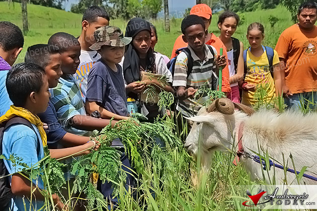 Eco-Kids hand feed Chaa Creek's resident alfa male goat