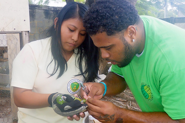 Belize Forest Department Looking After Threatened Species