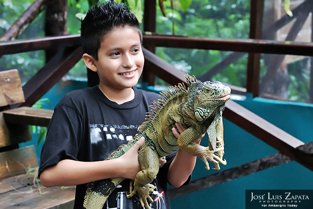 Alfa Iguana at Belize's Green Iguana Conservation Project Dies