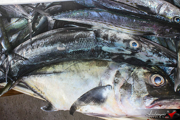 Belize Sets New Laws for Commercial Fishing, Managed and Sustainable Practices