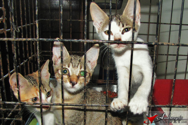 Saga Kittens