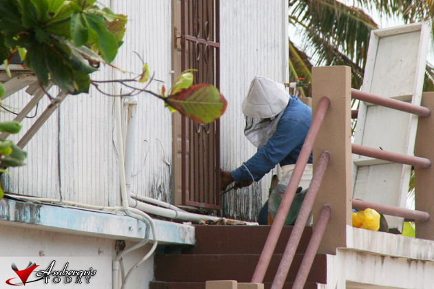 Bees being removed from BTB Office