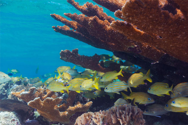 Conservation Community Plans Exciting Events for Reef Week 2016, Belize