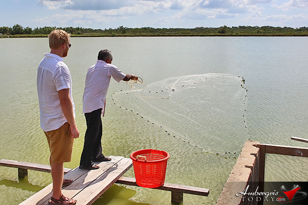Shrimp Shortage Expected in Belize After $30Mil Shutdown Loss Affects Industry