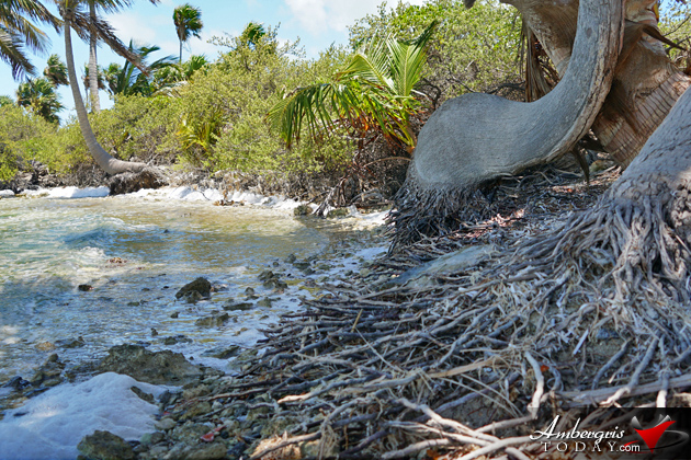 Leonardo DiCaprio Blackadore Caye Restorative Island Development Belize