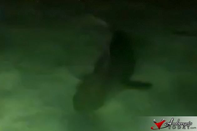 Bull Sharks roaming around San Pedro