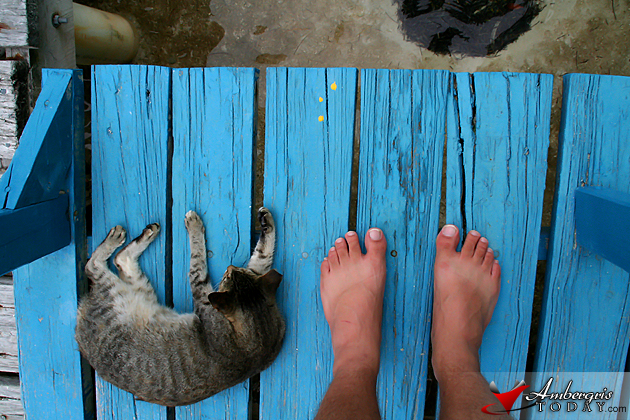 Catnap in the afternoon at Caye Caulker