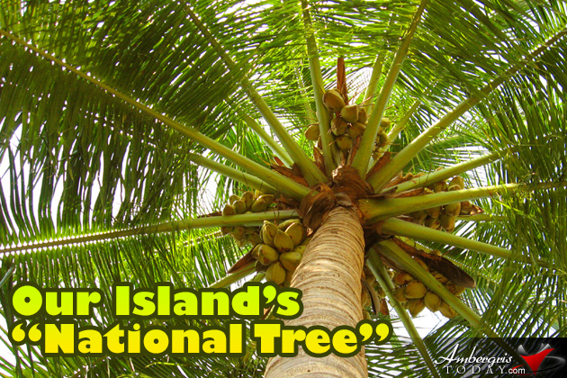 "Our Island's ""National Tree"""