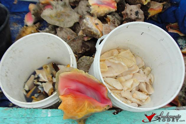 Conch Season Opens October 1