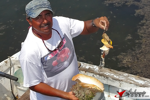 Belize Conch Season to Close July 1st