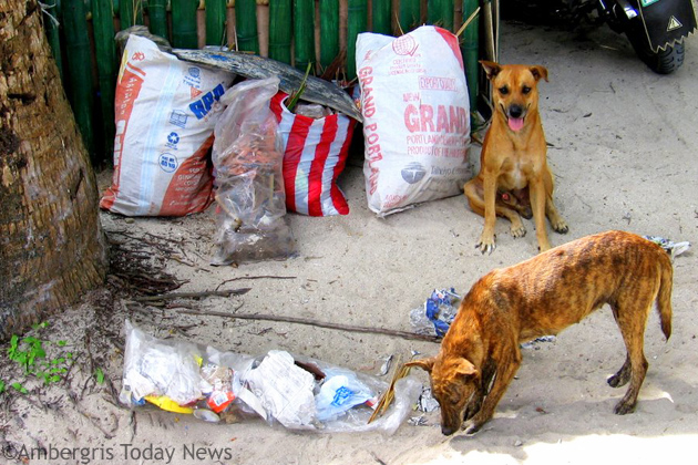 Stray Dogs are a nuisance to the community.