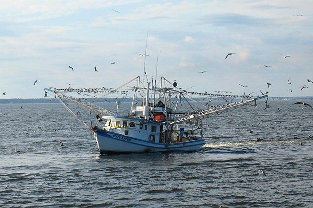 Trawling Totally Banned in Belize