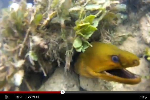 Green Moray Eels at The Villas at Banyan Bay