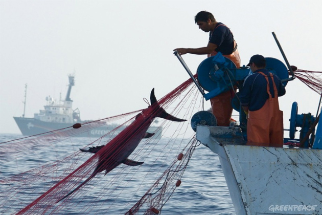 Oceana Calls Belize Government to improve Performance on Illegal Fishing