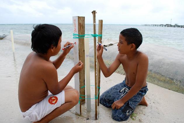 Children work on planting mangrove seedlings at Boca del Rio Park