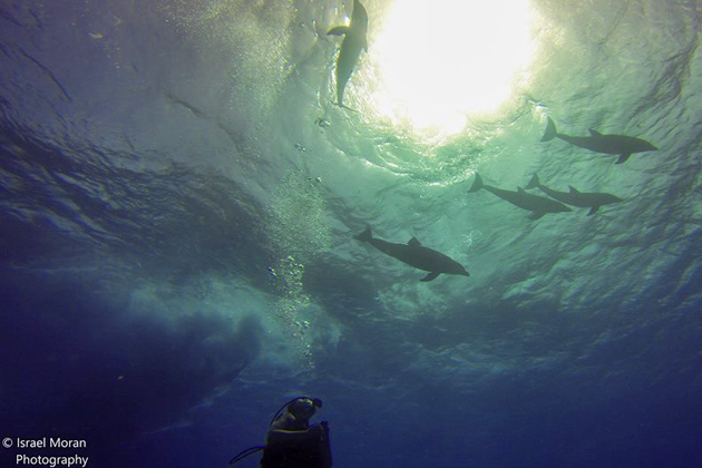 Divers encounter dolphins while diving in Tres Cocos Area, San Pedro, Belize
