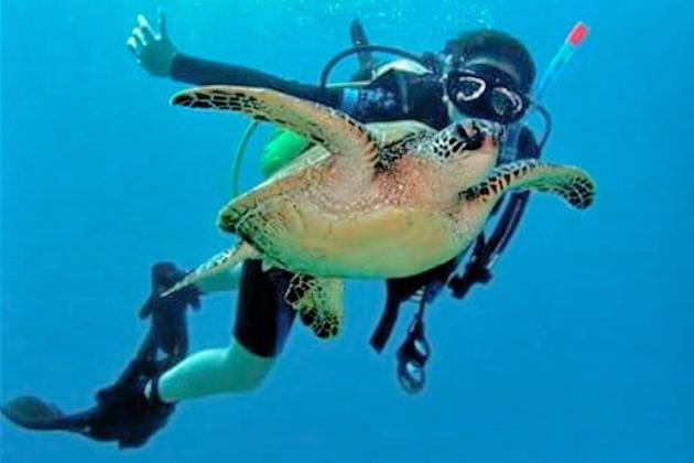 Epic Diving Encounter in Belize