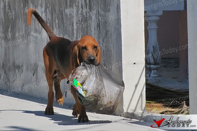 SAGA and San Pedro Town to Implement Dog Control Orders