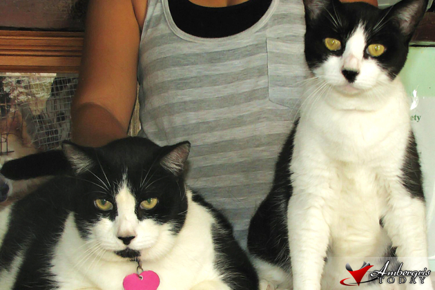 Chubby and Capri cared for by Saga