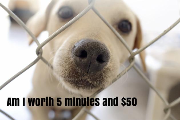 Adopt a pet dog Ambergris Caye Saga Humane Society