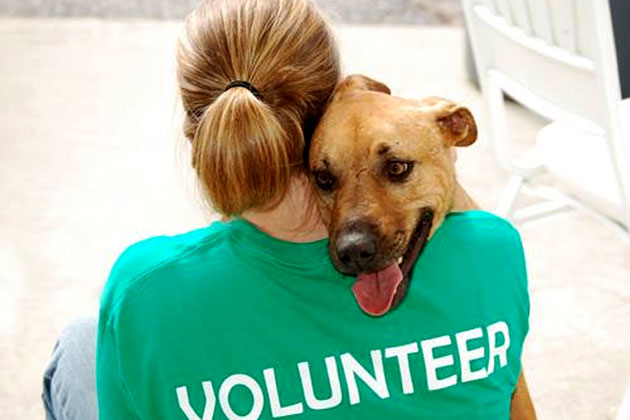 Saga Humane Society Says Business is NOT For Sale