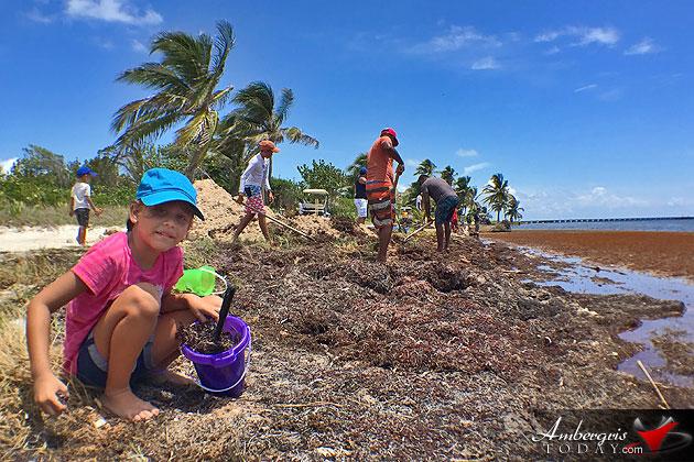 Build-A-Beach Volunteers in Belize Clean Up Sargasso