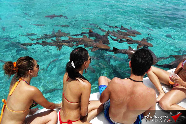 Shark Watching in Belize