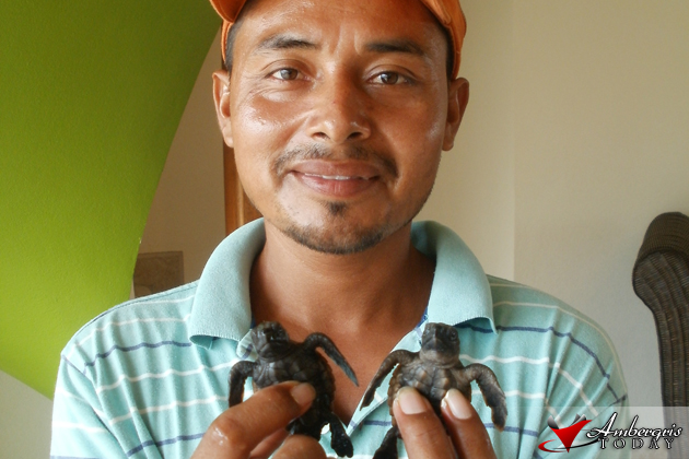 Grand Caribe employee with turtle hatchlings