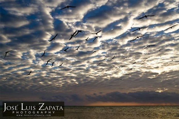 Seagulls in Sunrise by Jose Luis Zapata Photography