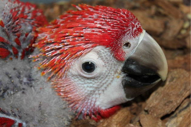 Republic of China (Taiwan) Supports Macaw Conservation in Belize