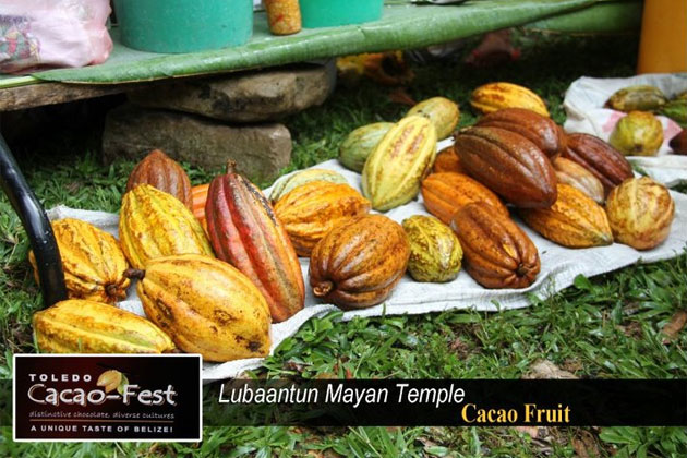 Cacao pods on display at Cacao Fest Toledo, Belize