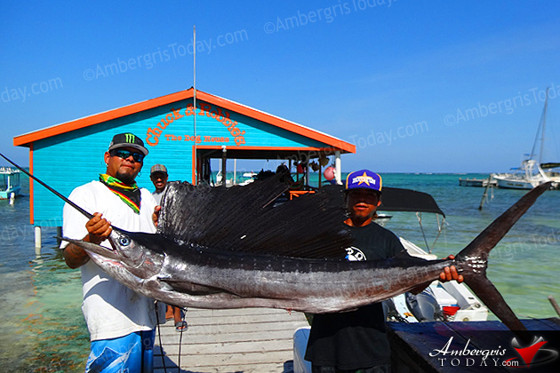 Sailfish, fishing in San Pedro, Ambergris Caye, Belize
