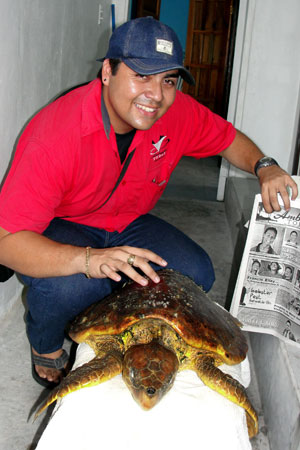 A sea turtle was getting pampered at Hol Chan Marine Reserve Office