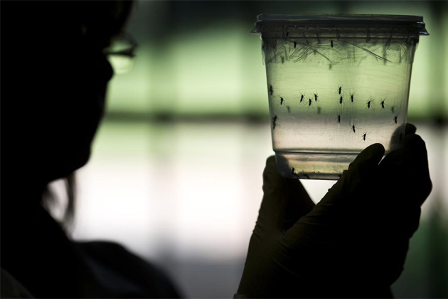 No Need to Panic on First Case of Zika in Belize