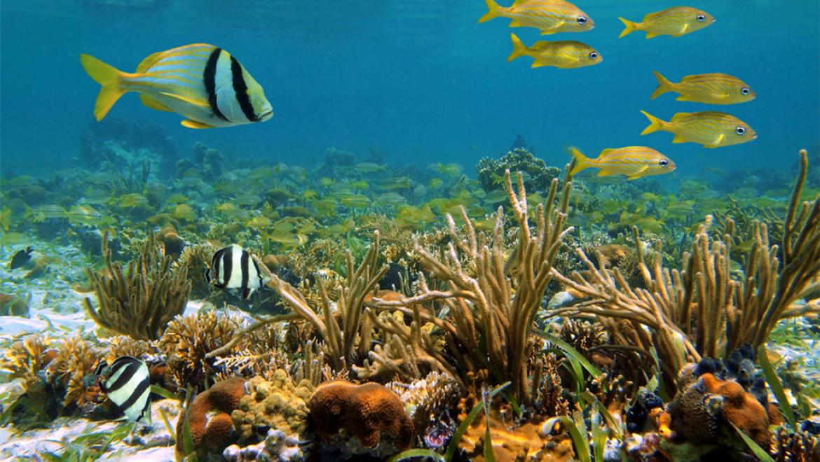 Mesoamerican Reef gets improving bill of health
