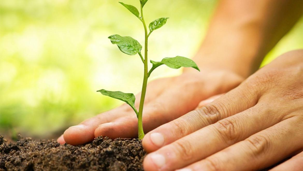 Forest Department Launches Campaign to Plant 10,000 Trees in Municipalities Countrywide