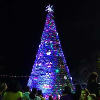 It's beginning to look a Lot like Christmas – Tree Lighting Ceremony