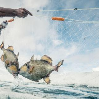 Minister of Blue Economy Says Not Seeking to Change Ban on Gillnets