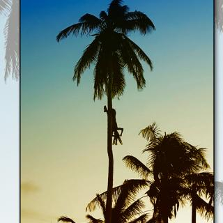 Just Hanging Around on Ambergris Caye, Coconut Leo, Tree Climber