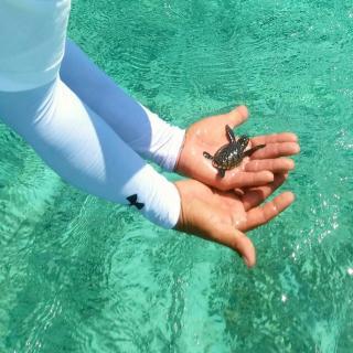 Go Turtle Go!!! Sea Turtle Rescue