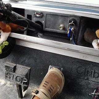 Cruising Island Dogs