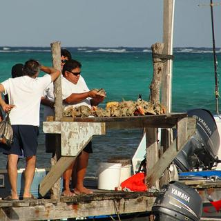 Fisherman removes conch from shell