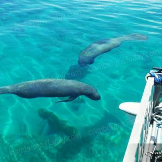 Hanging Out with Manatees in Belize