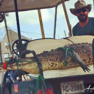 Crocodile Goes on Golf Cart Ride