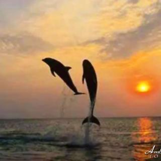 Magical Dolphin Encounters in Belize