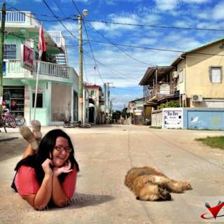 Sleeping stray dog on the quiet streets of Caye Caulker Village, Belize
