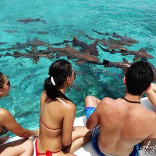 Shark Watching in Belize